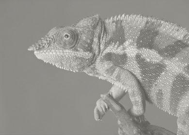 Resiliência: a arte de ser camaleão